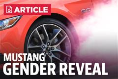 Beth & Justin's Mustang Gender Reveal